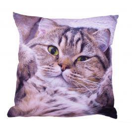 Forbyt, Fotopolštář, Exclusive Kočička, 40 x 40 cm polštář (návlek + vnitřek)