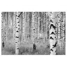 Tapeta Woods 248x368 cm