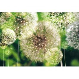 Tapeta Dandelion 70.5x104 cm