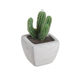 Svíčka s podstavcem Green Cactus