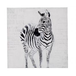 Obraz Zebra 80x80 cm