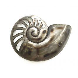 Nástěnná dekorace Beaux Arts Nautilus