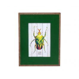 Fotorámeček Bug